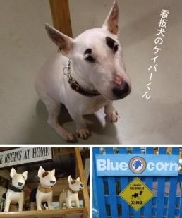 BLUE CORN(ブルーコーン)