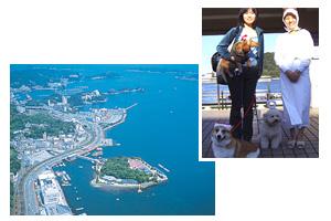 ミキモト真珠湾