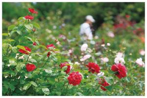花と竹の公園 沖縄かぐや姫