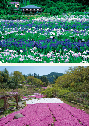 花の郷 滝谷花しょうぶ園