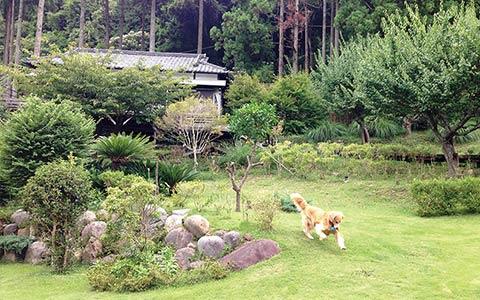 ホテル四季の蔵 専用庭