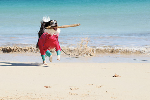-愛犬と過ごす海辺のお宿- ムーン・リバージュ.