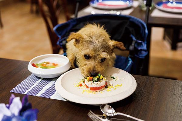 ワンちゃんも食べられるペット栄養管理士監修の「愛犬フレンチ」